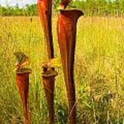 Schnell's Pitcher Plant Poster
