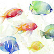 School Of Tropical Fish Poster