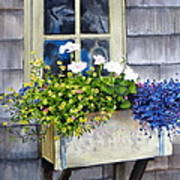 'sconset Window Box Poster by Karol Wyckoff