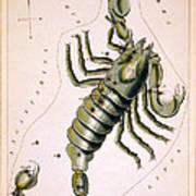 Scorpio Constellation  1825 Poster