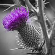 Scotland Calls 2 Poster