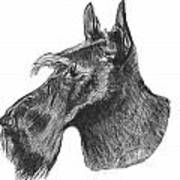 Scottish Terrier Dog Poster by Catherine Roberts