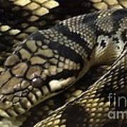 Scrub Python Abstraction Poster