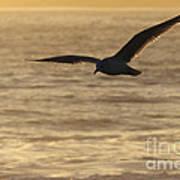 Sea Bird In Flight Poster by Paul Topp