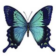 Sea Green Swallowtail Butterfly Poster