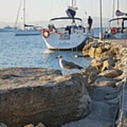 Sea Gull 1 Poster