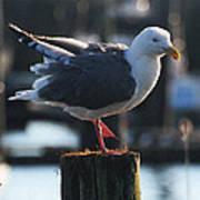 Sea Gull On Break Poster