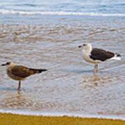 Sea Gull Pair Poster
