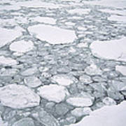 Sea Ice Pancake Ice Forming Antarctica Poster
