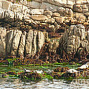 Sea Lions In Monterey Bay Poster by Artist and Photographer Laura Wrede
