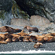 Sea Lions On The Sea Shore Poster