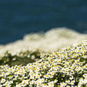 Sea Mayweed And The Sea Poster