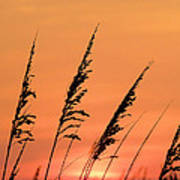 Sea Oat Sunset Poster by JC Findley