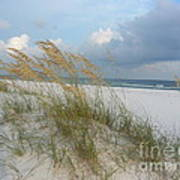 Sea Oats  Blowing In The Wind Poster