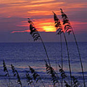 Sea Oats By The Sea Poster