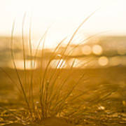 Sea Oats Sunset Poster by Sebastian Musial