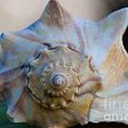 Sea Shell Poster