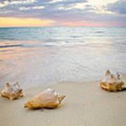 Sea Shells At Sunset Poster