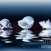 Sea Shells On Water Poster