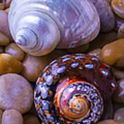 Sea Snail Shells Poster
