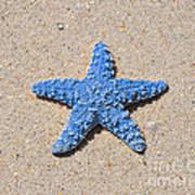 Sea Star - Light Blue Poster