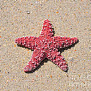 Sea Star - Red Poster