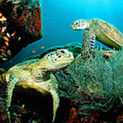 Sea Turtle Oil On Canvas Poster