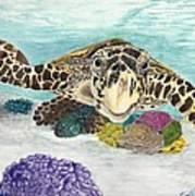 Sea Turtle Hello Poster
