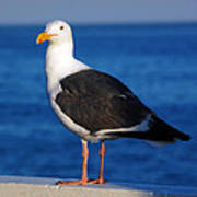 Seagull 2 Poster by Debra Thompson