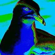 Seagull Art 2 Poster