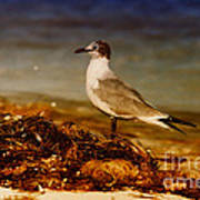 Seagull At The Keys Poster