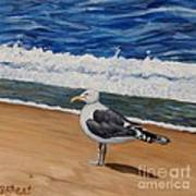 Seagull At The Seashore Poster