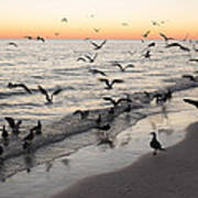 Seagulls Feasting Poster