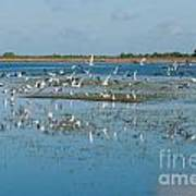 Seagull Flock Poster
