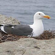Seagull Nest Poster