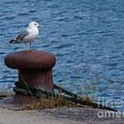 Seagull On A Bollard  Poster