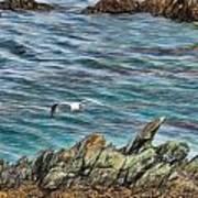 Seagull Over Rocks Poster