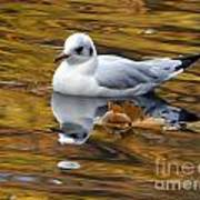 Seagull Resting Among Fall Leaves Poster