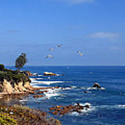 Seagulls At Laguna Beach Poster