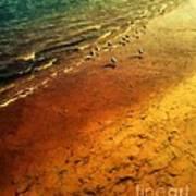 Seagulls At Sunset Poster