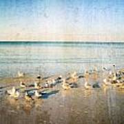 Seagulls Gathering By Sharon Cummigs Poster by William Patrick