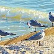 Seagulls On Wall Poster