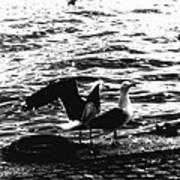 Seagulls  Poster