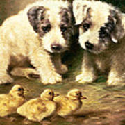 Sealyham Puppies And Ducklings Poster