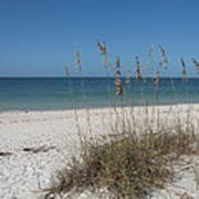 Seaoats And Beach Poster