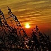 Seaoats And Sunrise Hatteras Island 1 7/31 Poster