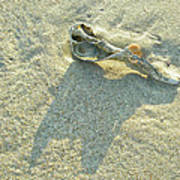 Seashell And Shadow On Sand Poster