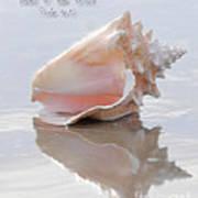 Seashell Be Still Poster