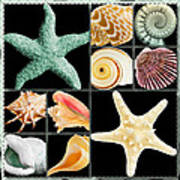 Seashell Collection Poster