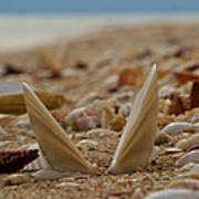 Seashell Graveyard Poster by Robert Bascelli